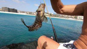 Come Pescare a Light Rock Fishing con il Pane
