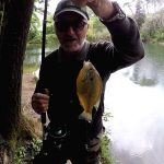 Pescare nel Lago i Persici Sole con i Lombrichi
