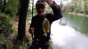 Read more about the article Pescare nel Lago i Persici Sole con i Lombrichi