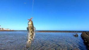 Read more about the article Esche Light Rock Fishing: Mezze Moschette, Soft Bait e Esche Siliconiche