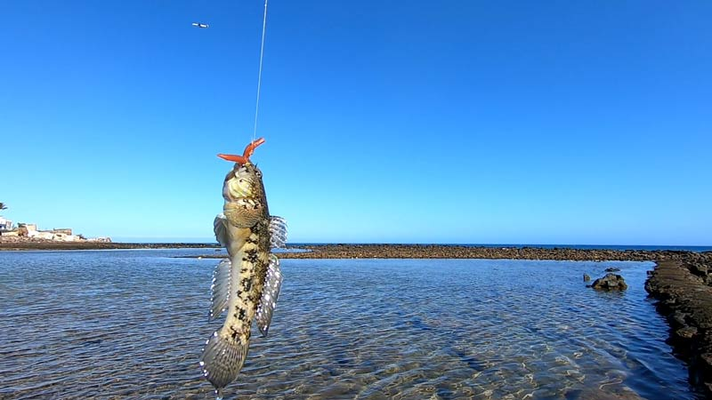 You are currently viewing Esche Light Rock Fishing: Mezze Moschette, Soft Bait e Esche Siliconiche