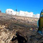 Pesca di Superficie a Fuerteventura