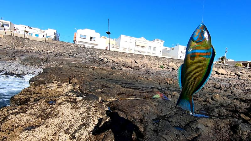 You are currently viewing Pesca di Superficie a Fuerteventura