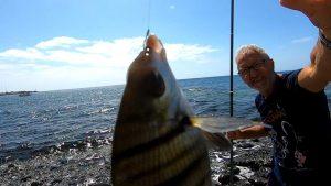 Read more about the article Pescare dalla Riva Rocciosa di Puerto del Rosario